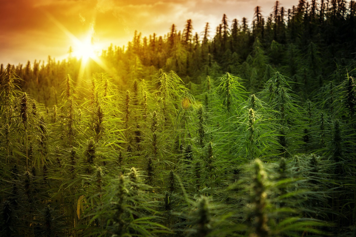 Jay Selthofner, Independent Reporter of Wisconsin and Michigan Hemp and Cannabis News