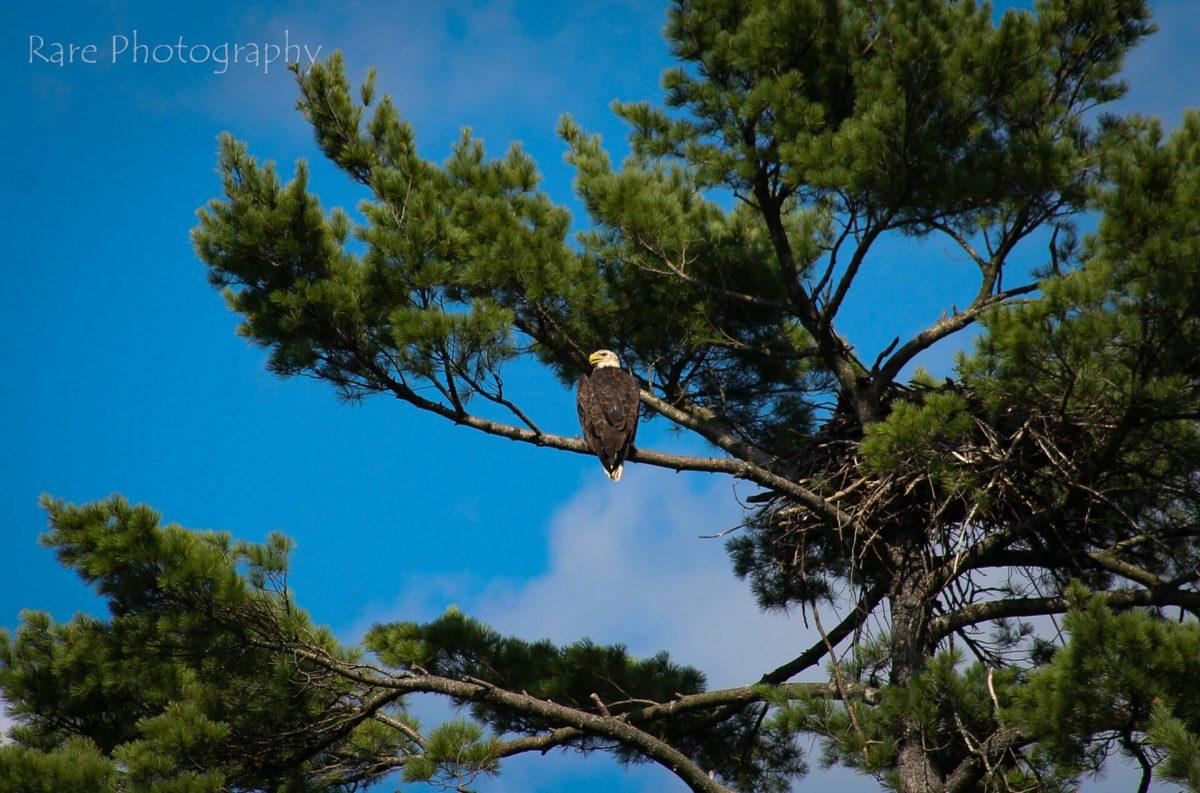 Rare-Photography.com Fond du Lac Wisconsin Photographer